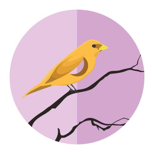 Hollow Bird